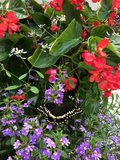 Flora and Fauna found